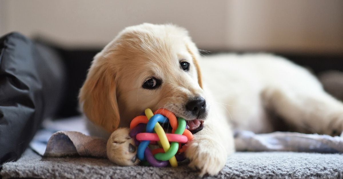 Αξεσουάρ για σκύλους