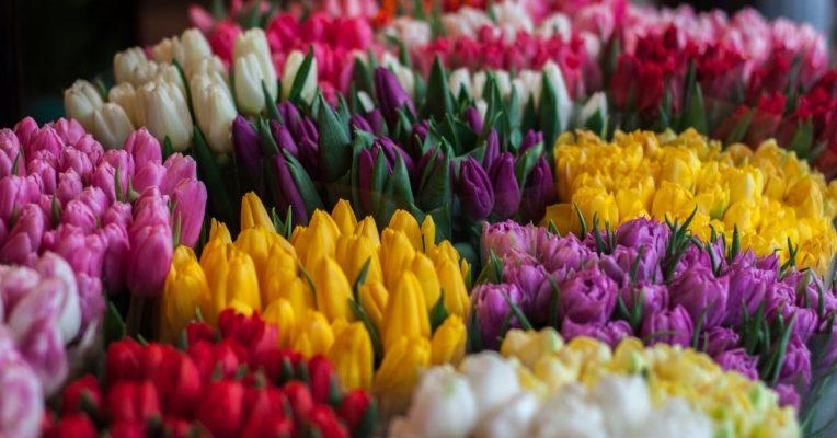 Χρώμα λουλουδιών - Σημασία